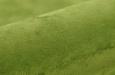 110145-Monza-6-groen