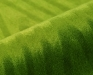 palora-1025-6-groen